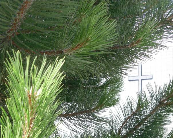 image of pine boughs and cross